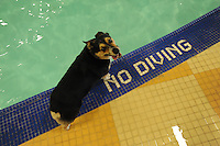 NWA Democrat-Gazette/ANDY SHUPE<br /> Dogs swim Saturday, Aug. 22, 2015, during the Pooch Pool Party at The Jones Center in Springdale. The facility held the event before draining the pool to begin planned improvements and repairs. Visit nwadg.com/photos to see more photographs from the event.