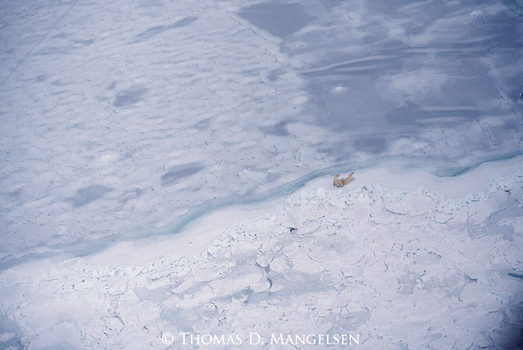 Two polar bears sit at the ice line waiting for Hudson Bay to freeze.<br /> Manitoba, Canada