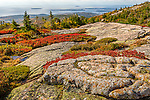 Fall foliage on Cadillac Mountain in Acadia National Park, Maine, USA