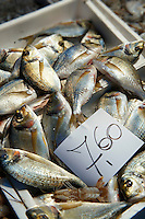 Fresh fish - Venice Rialto Fish Market