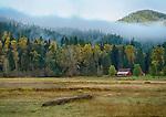 Idaho, North, Kootenai County, Kingston, Enaville. A farm scene along the Coeur d'Alene River with the beginnings of autumn color on a foggy day.