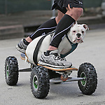 Commuting to The Sweatshop, gym owner Damien Stephens uses a motorized skateboard with his sidekick Lola in Coral Gables.