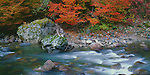 Mount Baker-Snoqualmie National Forest, WA<br /> Fall colored vine maple on the Stillaguamash