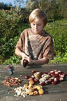 Seife aus Kastanien, Kastanienseife, Kastanien-Seife, Kind, Junge macht aus den Früchten der Rosskastanie Seife, die Kastanien werden mit einem Nußknacker geknackt, dann wird die braune Schale abgeschält, die Saponine der Früchte dienen als Waschsubstanz, Gewöhnliche Rosskastanie, Roßkastanie, Reife Früchte, Ross-Kastanie, Roß-Kastanie, Kastanie, Aesculus hippocastanum, Horse Chestnut, Marronnier d`Inde