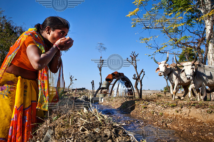 A woman drinks water from a channel supplied by a cattle driven water wheel.