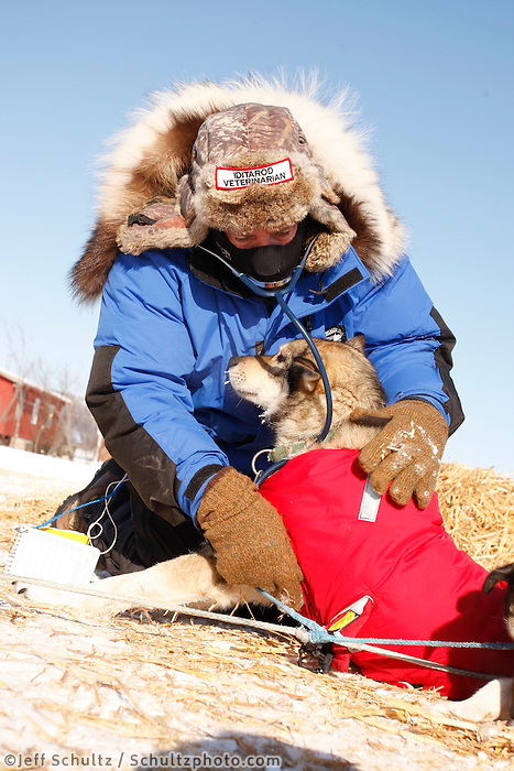 Sunday  March 14 , 2010   Veterinarian Doug Marks examines a Peter Kaiser dog at the Kaltag checkpoint .