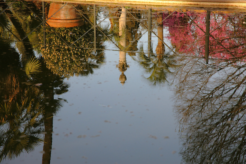 The reflected image of a column and of its surrounding vegetation, among which a flowering Judas tree and some palms, in the flat water surface (with some fallen leaves) of the main basin of villa Torlonia, in Rome. Digitally Improved Photo.