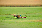 Amish boy mowing with three team mules.