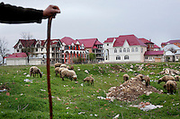 A Romanian farmer stands on the outskirts of Buzescu. Buzescu is known for it's ultra-wealthy Roma and their bizarre mansions that line the main street. The Roma of Buzescu are part of the Kalderash clan and are known for being coppersmiths and dealing with metal scraps. After the fall of the communist regime in the late 80's, they stripped old factories of their metals and some made a small fortune re-selling them. They are also known for making cazane, copper stills that produce alcohol such as palinka, a plum brandy.