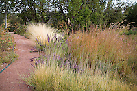 Path through naturalistic drought and heat tolerant dryland grass meadow garden with Sideoats Grama (Bouteloua curtipendula) fore, Little Bluestem (Schizachyrium scoparium), and Feather grass (Nassella tenuissima) rear