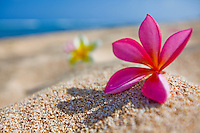 Plumerias on the beach