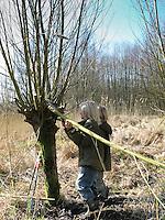 Kind, Junge schneidet mit einer Astschere und Säge Zweige von einer Kopfweide, Weide, Weiden, Salix, Sallow, Willow, Pollard Willow
