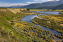 Redcliff Wetland Reserve, South Island, New Zealand