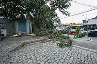 SAO PAULO, SP, 14.01,2014. QUEDA DE ARVORE. Árvore de médio porte cai na avenida Francisco Morato esquina com a rua Alvarenga, na tarde desta terça feira. (Foto: Adriana Spaca/Brazil Photo Press.