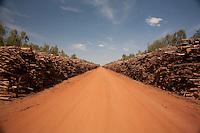 Vazante_MG, Brasil...Eucaliptos cortados em Vazante, Minas Gerais...Cut eucalyptus in Vazante, Minas Gerais...Foto: LEO DRUMOND / NITRO