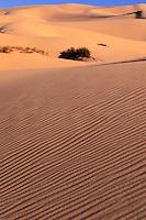 Africa,Libya,desert dunes