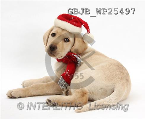 Kim, CHRISTMAS ANIMALS, photos(GBJBWP25497,#XA#) stickers
