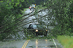 A driver attempts to go try to get around this tree but decides  to turned around,  on Vernon Street in Manchester, August 28, 2011, the tree was brought down during Hurricane Irene that caused widespread damage in Connecticut and a long the East Coast. (Jim Michaud/Journal Inquirer).