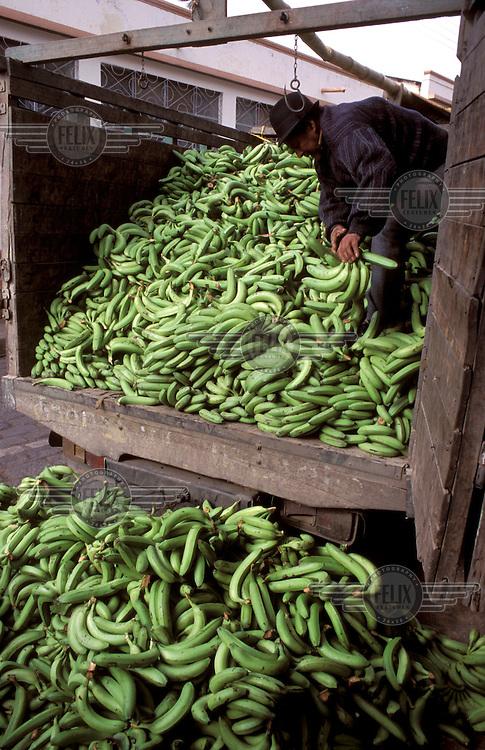© Jean Leo Dugast / Panos Pictures..Cajabamba, ECUADOR..Indian famer unloading a truck full of bananas.