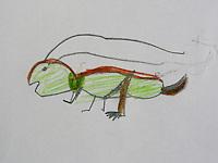 Kleines Kind hat Heuschrecke abgemalt , die Heuschrecke saß auf dem Blatt Papier, fertige Zeichnung mit Beschriftung, Roesels Beißschrecke, Metrioptera roeselii