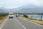 Pic shows: Hungry elephant swims two miles for some food today 24.7.13<br /> <br /> This elephant has swum 2 miles from Uda Walawe National Park in Sri Lanka across a reservoir to a road. An electrified fence keeps her from the traffic. <br /> Instead of feeding her local salesmen offer sweet corn and bananas for sale to passing tourist buses.<br /> <br /> <br /> <br /> <br /> <br /> Pic by Gavin Rodgers/Pixel 8000 Ltd