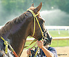 Jazzysdudeeaintrude winning at Delaware Park on 9/1/15