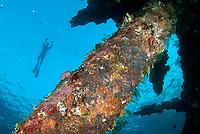 Coral-covered wreck with snorkeller, Liberty Wreck dive site, Tulamben, near Seraya, Bali, Indonesia, Indian Ocean