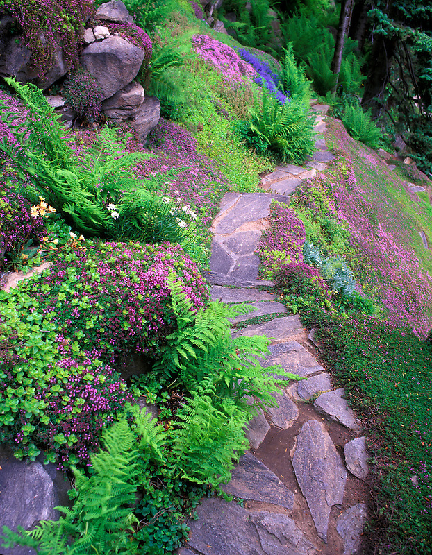 Rock pathway and ground cover at Ohme Gardens, Wenatchee, Washington