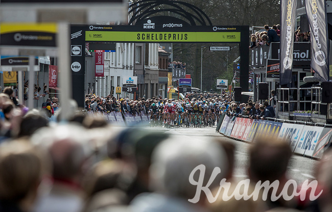 Peloton crossing the finish line with 1 lap to go.<br /> <br /> 105th Scheldeprijs 2017 (1.HC)<br /> 1day race: Mol &gt; Schoten 200km