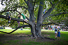 "August 20, 2012; Children climb a tree on the Main Building Quad before the performance of the Shakespeare play, ""A Midsummer Night's Dream."" Photo by Barbara Johnston/University of Notre Dame"