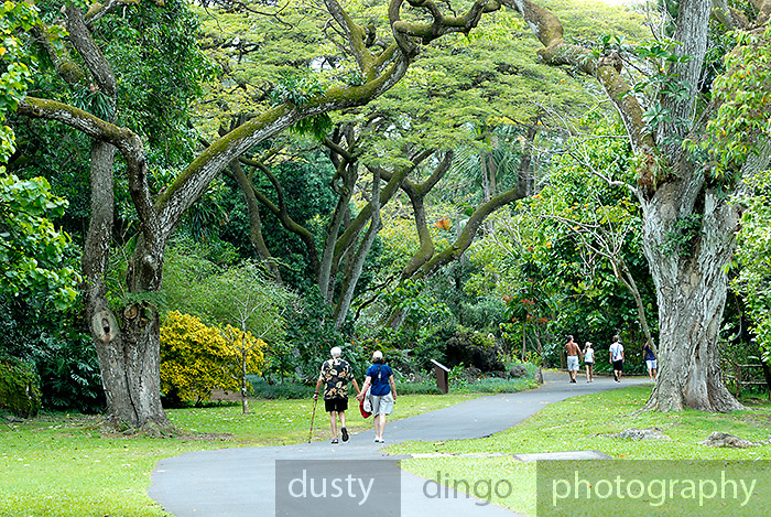 The beautiful gardens of Waimea Valley, Oahu, Hawaii RIGHTS MANAGED LICENSE AVAILABLE FROM www.gettyimages.com - contact Sheldon for details