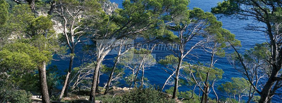 Europe/Provence-Alpes-Côte d'Azur/83/Var/Iles d'Hyères/Ile de Porquerolles: Grand Cale Est - Pins verts