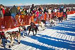 Charley Bejna starting Iditarod 2014, Willow, Southcentral Alaska, Winter.