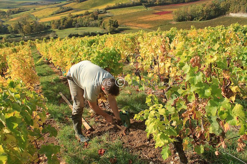 France, Cher (18), région du sancerrois, Reigny, vignoble en automne sancerre A.O.C. Premier plan, vignoble vers le chemin du soleil, nom donné en raison de l'exposition plein sud et en amphithéatre de la pente, sur le domaine Durand, replantation de vigne de cépage sauvignon par Hervé (employé) // France, Cher, Sancerre region, Reigny, Sancerre vineyards in autumn, Leading vineyards to the path of the sun, a name given because of the southern exposure and slope of the amphitheater, on the field Durand, replanting vineyard sauvignon Hervé (employee)