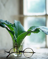 On a stone window sill in the living room a pair of spectacles rests next to a simple arrangement of some leaves in a glass tumbler