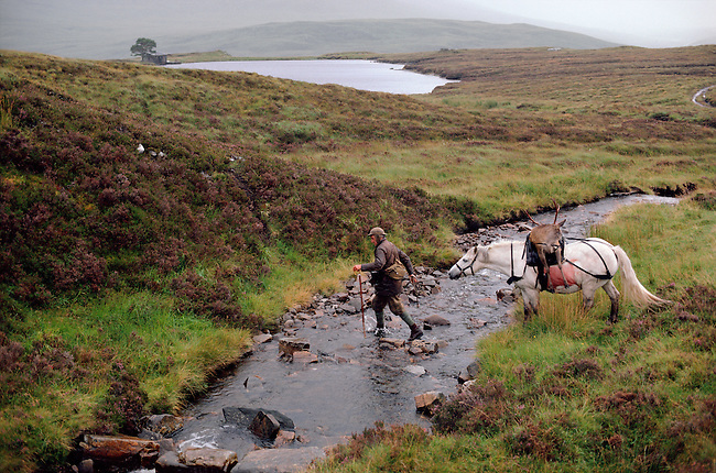 Deer Stalker leads his pony with dead stag over a burn. The Highlands. Scotland.