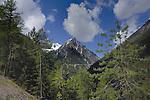 Alpine peak and forests. Hahntennjoch pass, Imst district, Tyrol, Tirol, Austria.