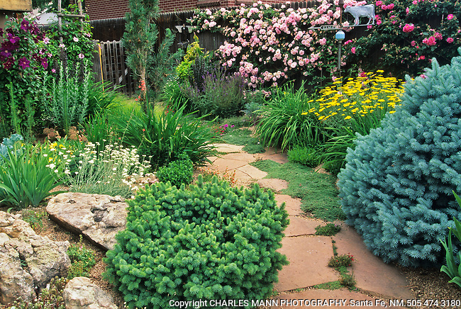 A lush and livey garden developed by and built by Rochelle Eliasen with the help of her husband Vern at their home in Denver.