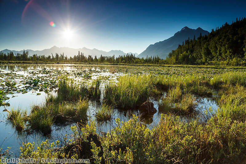 Sun rises over Chugach Mountains and Pioneer Peak with lily pads on pond  in Knik River valley Southcentral Alaska  summer June 2015<br /> <br /> (C) Jeff Schultz/SchultzPhoto.com