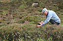 2012_08_02_BILBERRY_HARVEST