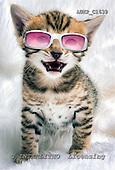 Samantha, ANIMALS,  photos,+cats,++++,AUKPC1639,#A# Humor, lustig, divertido