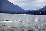 USA, Alaska, Juneau, Humpback Whales spotted while whale watching and exploring in Stephens Passage