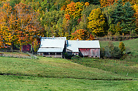 Farm buildings with autumn color, Reading, Vermont, USA.