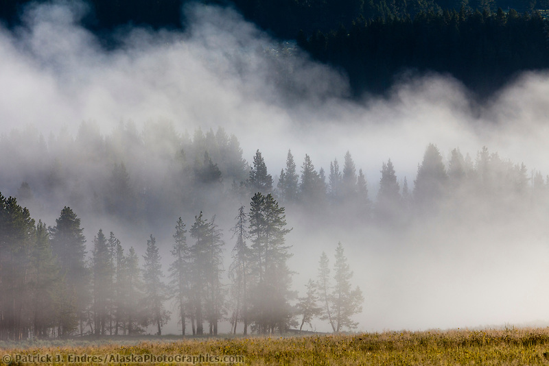 Steam rises over forest, Yellowstone National Park