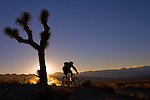 A photo of a silhouetted  mountain biker riding past a joshua tree at sunset in the desert of eastern California.