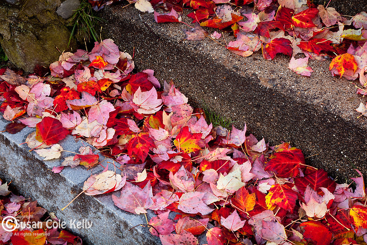 Fallen autumn leaves in Ogunquit, ME