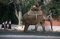 Asie/Inde/Rajasthan/Jaipur: Elephant et écolières prés prés Water Palace
