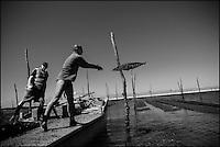 France, Gironde (33), bassin d'Arcachon, réserve naturelle du Banc d'Arguin, Sur les parcs à Huitres  Auto N°:  2013-137, Auto N°:  2013-138, Auto N°:  2013-139 Auto N°:  2013-140  // France, Gironde, Bassin d'Arcachon, Banc d'Arguin Natural Reserve, Bed oysters Auto N°:  2013-137, Auto N°:  2013-138, Auto N°:  2013-139 Auto N°:  2013-140