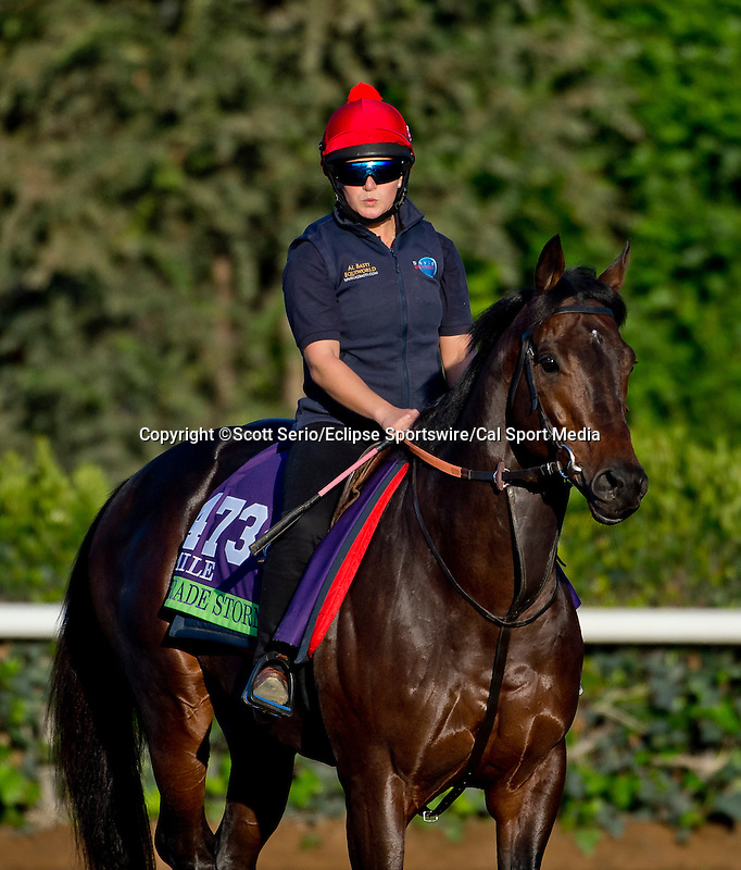 October 28, 2014:  Trade Storm, trained by David Simcock, exercises in preparation for the Breeders' Cup Mile at Santa Anita Race Course in Arcadia, California on October 28, 2014. Scott Serio/ESW/CSM