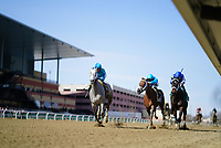 OZONE PARK, NY - APRIL 07: My Miss Lilly (KY) #6, ridden by jockey Joe Bravo, wins the Gazelle Stakes on Wood Memorial Stakes Day at Aqueduct Race Track on April 7, 2018 in Ozone Park, New York. (Photo by Dan Heary/Eclipse Sportswire/Getty Images)